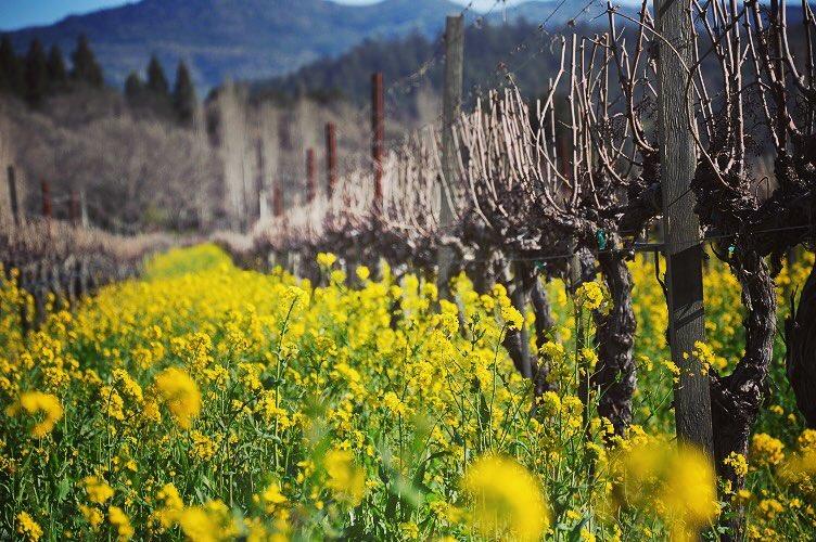 Napa Wine Tour Drivers ™ napa-wine-Tours-5 Photo Gallery